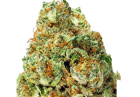 Turbo Bud von Heavyweight Seeds