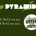Sonderaktion bei Pyramid Seeds