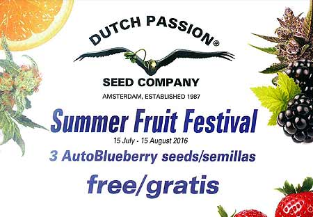 Summer Fruit Festival von Dutch Passion bei Samenwahl.com