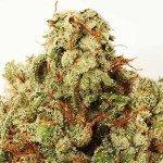 Green Ninja von Heavyweight Seeds