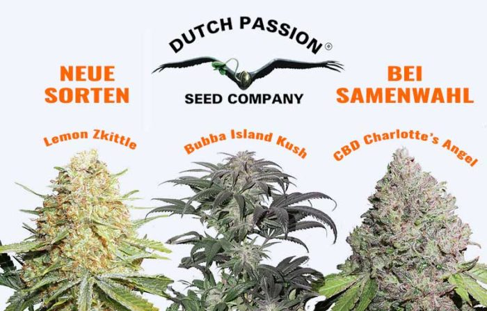 Neue Hanfsorten von Dutch Passion