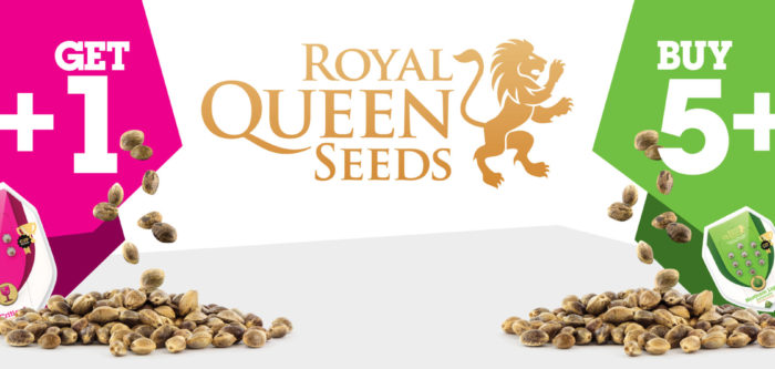 Royal Queen Seeds Promo auf Samenwahl