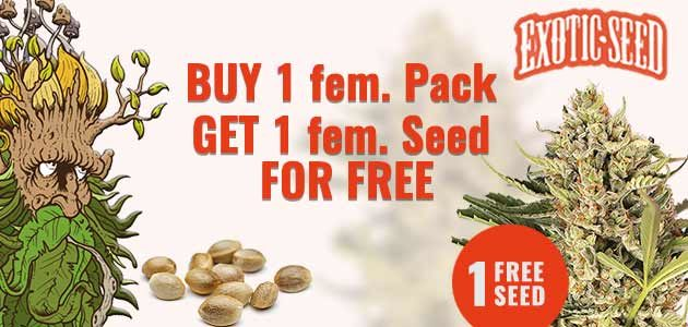 Exotic Seeds Promo