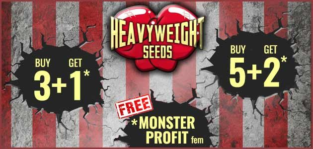Promo Heavy Weight Seeds